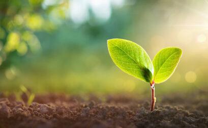 El medio ambiente y la conservación del entorno